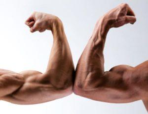 la-massa-muscolare