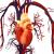 L'efficienza degli integratori alimentari per la circolazione del sangue